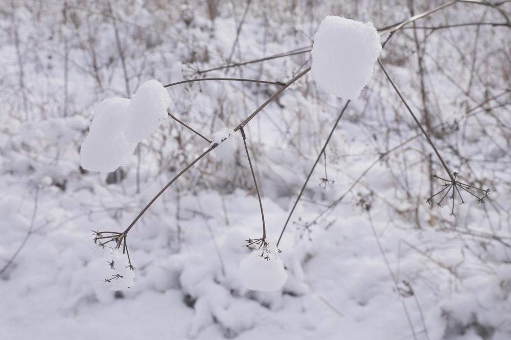 blog humeur janvier auvergne